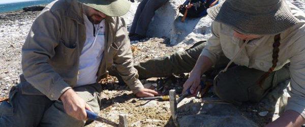 Paleontólogos extrayendo los restos de un pez osteíctio articulado, y relevando las coordenadas GPS del punto del hallazgo. En el sitio aflora la Formación Puerto Madryn, cuyos sedimentos marinos corresponden al Mioceno Medio superior.