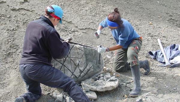 Formación Santa Cruz (Mioceno temprano, ~ 19-17 millones de años). Reducción de un bloque que contiene una coraza y esqueleto de gliptodonte para facilitar su traslado al campamento.