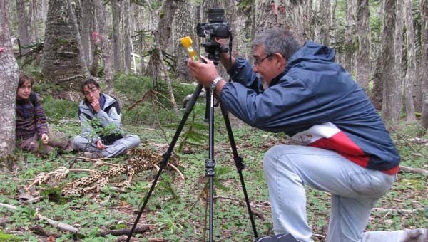 Toma de fotografía hemisférica en bosque de Araucaria araucana para la cuantificación de la cobertura del dosel. Febrero 2012.