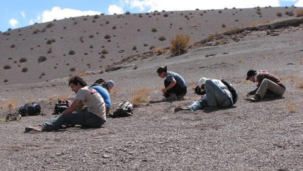 Estudiantes de Paleontologia Vertebrados buscando microvertebrados fósiles en Las Hornillas. Campaña 2010.
